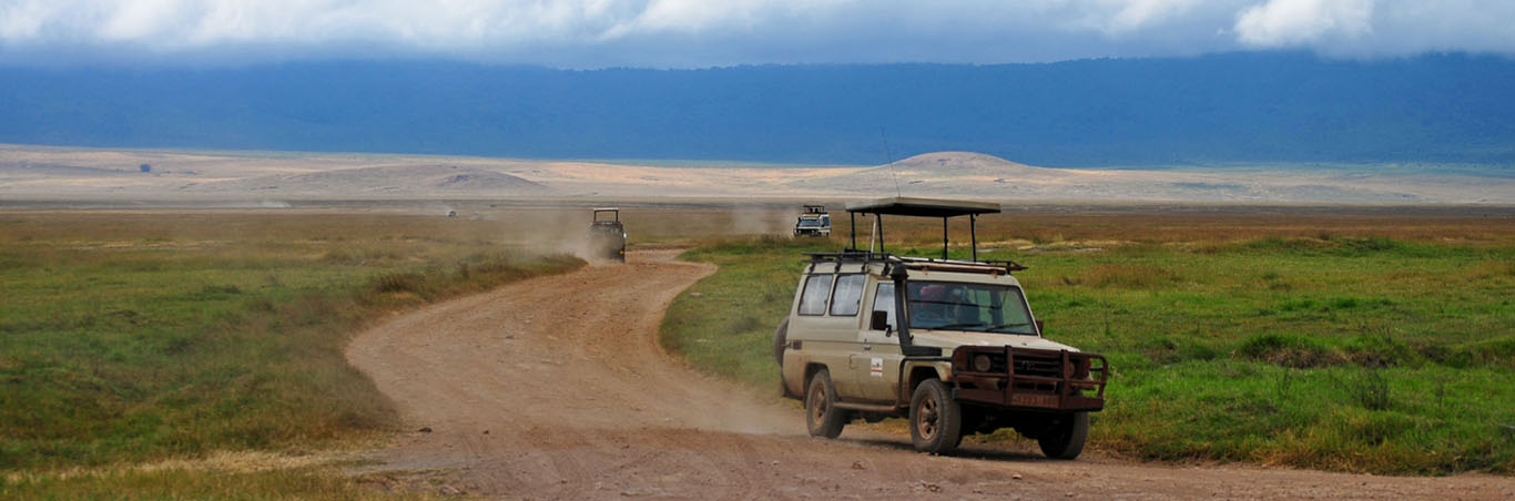 Safari Tours and Routes